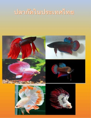 หน้าปก-ปลากัดในประเทศไทย-ookbee