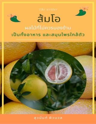 หน้าปก-ส้มโอ-ผลไม้ที่ไม่ควรมองข้าม-เป็นทั้งอาหาร-และสมุนไพรใกล้ตัว-ookbee
