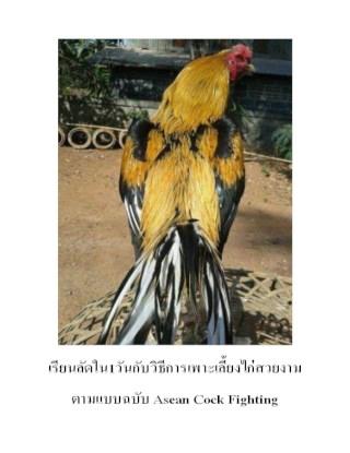 หน้าปก-เรียนลัดใน1วันกับวิธีการเพาะเลี้ยงไก่สวยงามตามแบบฉบับ-asean-cock-fighting-ookbee
