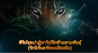 หน้าปก-ซีรีย์ชุดปาฏิหาริย์รักข้ามสายพันธุ์รักนิรันดร์ของเสือสมิง-ookbee