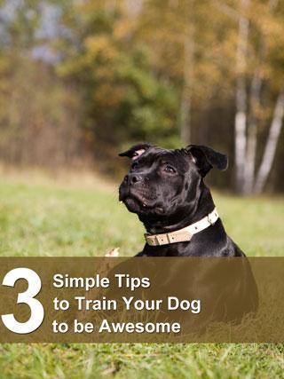 หน้าปก-3-simple-tips-to-train-your-dog-to-be-awesome-ookbee